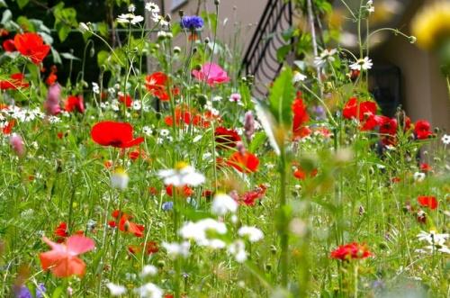 vadvirágos kert