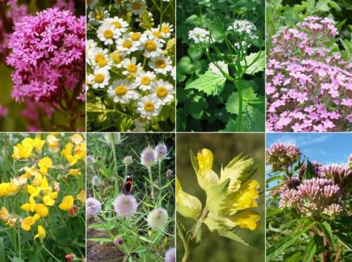 Tervezzünk romantikus vadvirágos kertet! - Kertépítés ...