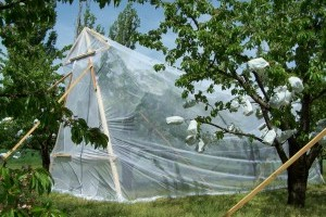 Mérföldkőhöz érkezett a magyar gyümölcsipar