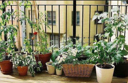 balkon_zoldseg