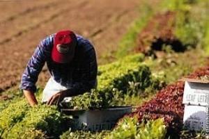 Vetésforgó, talajvédelem, komposztálás – a sikeres biogazdálkodás alapjai