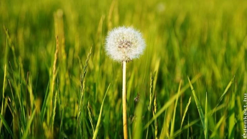 A fű nyári gondozása