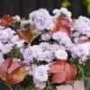 Őszi virágok a kertben