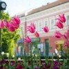 Hévíz és Csopak is ezüstérmet kapott az európai környezetszépítő versenyen