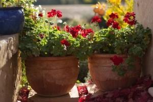 Fagyra várva - melyik növény bírja tovább?