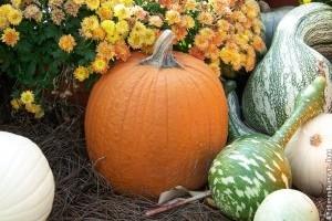 Októberi tökölős