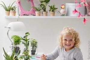 A 10 leggyakoribb mérgező szobanövény