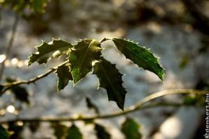 Jön a tél: kemény hidegbetörés, hózáporokkal!