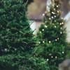 Kerti karácsonyfa...