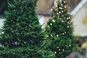 Állítsunk kerti karácsonyfát a gyerekekkel!