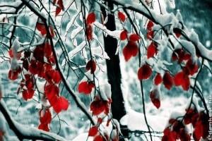 A falevelek télen