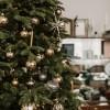 Milyen fenyőfát válassz karácsonyra?