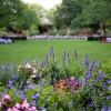 Hosszan nyíló virágok napos kertbe