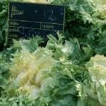 Salátaszótár: a fejes saláta egzotikus rokonai