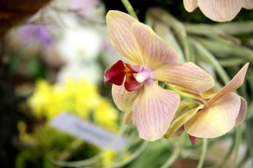 Orchidea Ünnep 2014