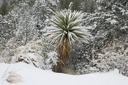 Neveljünk télálló egzotikus növényeket a kertben!