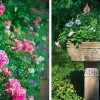 Az én kertem, az én álmom… 2. rész