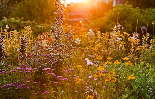 A növények életciklusában a fénynek elsődleges és pótolhatatlan szerepe van.