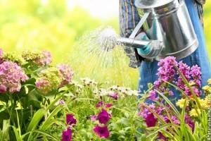 A kezdő kertészek 10 leggyakoribb hibája - 2. rész