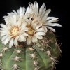 Kaktusz ünnep Mánfai Gyula emlékének szentelve