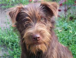 kutya-profilkep