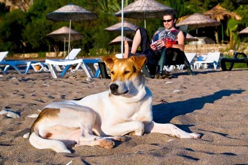 kutya-napozik-tengerpart