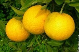 Megnyugtató eredmények narancs fronton