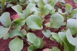 Kezdődhet a zöldségek tavaszi palántanevelése