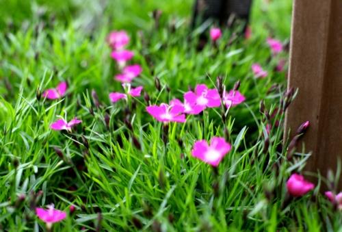 változatos növényvilág