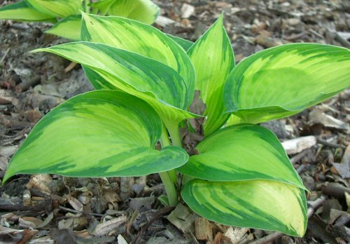 Kertészkedés árnyékban - képes növényajánlóval