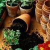 Több föld, nagyobb cserép - ültetés lépésről-lépésre