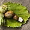 Rossz nevet kaphatott a természetrajzi múzeumokban őrzött növényfajok fele