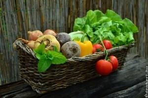 A magyar konyhakertek megművelése egyre dinamikusabban terjed