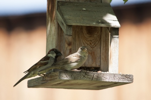 birds-2397476_1280