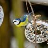 Kezdetét vette az országos madáretetési szezon