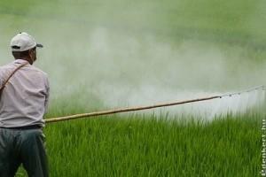 A NÉBIH folyamatosan ellenőrzi a nem engedélyezett növényvédő szerek forgalmazását és felhasználását