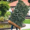 Szeretnél zöld borostyánkerítést 1 nap alatt?