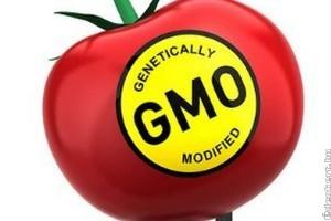 Magyarország továbbra is a GMO-mentesség mellett van