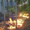 Hőségben az erdők még nagyobb veszélyben!