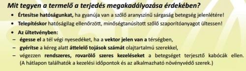 sargasag_szolo