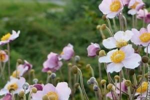 A legszebb nyár végi évelők a kertben