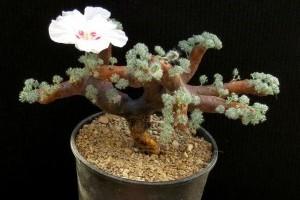 Afrikába repít minket az Őszi Kaktuszkiállítás és Vásár