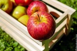 Melyik alma fajták a kedvenceink?