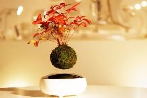 Elektromágnes mozgatja a lebegő bonsait