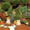 Hétvégén Kertészeti Napok a Budai Arborétumban