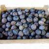 Zöldség-gyümölcs piaci árak 2016. október közepén