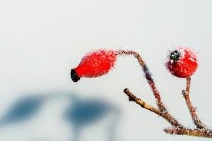 Enyhe, átlagos télre van kilátás idén