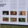 Madárbarát kertet és tanösvényt adtak át a Városligetben
