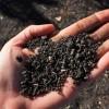 10 érdekes adat a talajokról