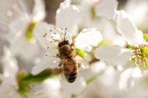 Sürgős változásra van szükség, hogy megvédjük a beporzó rovarokat!